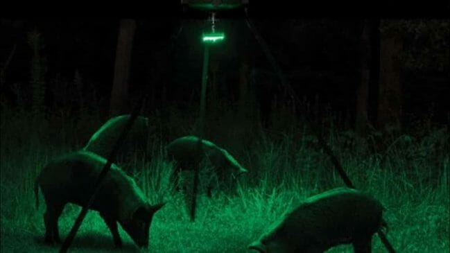 Best Hog Feeder Lights
